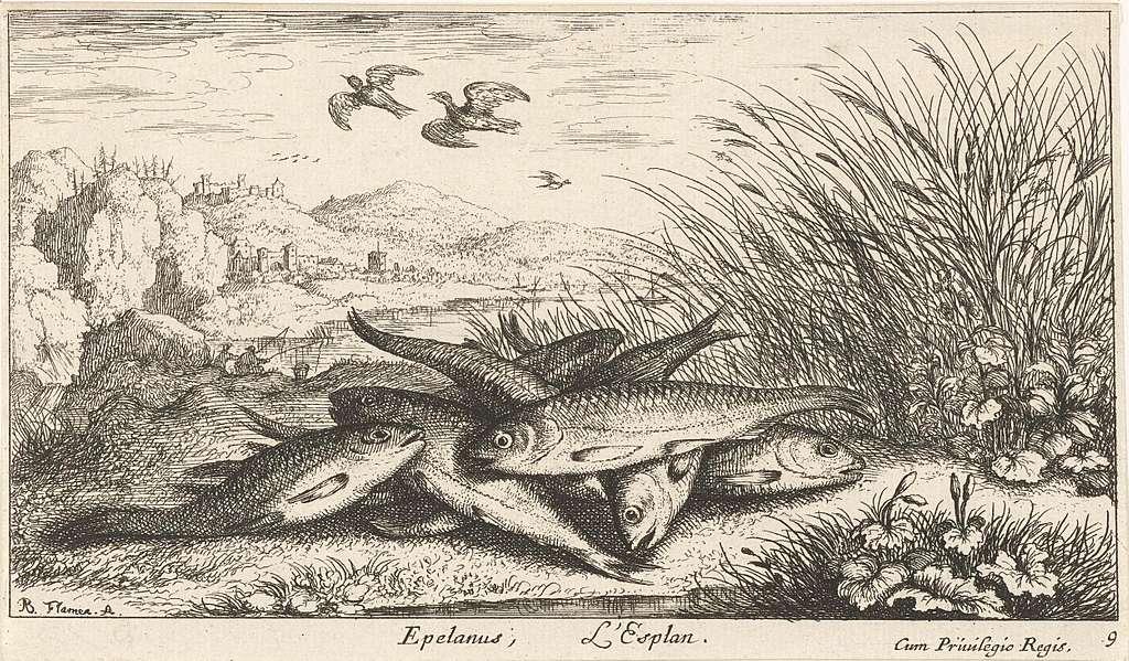 Vissen op een rivieroever