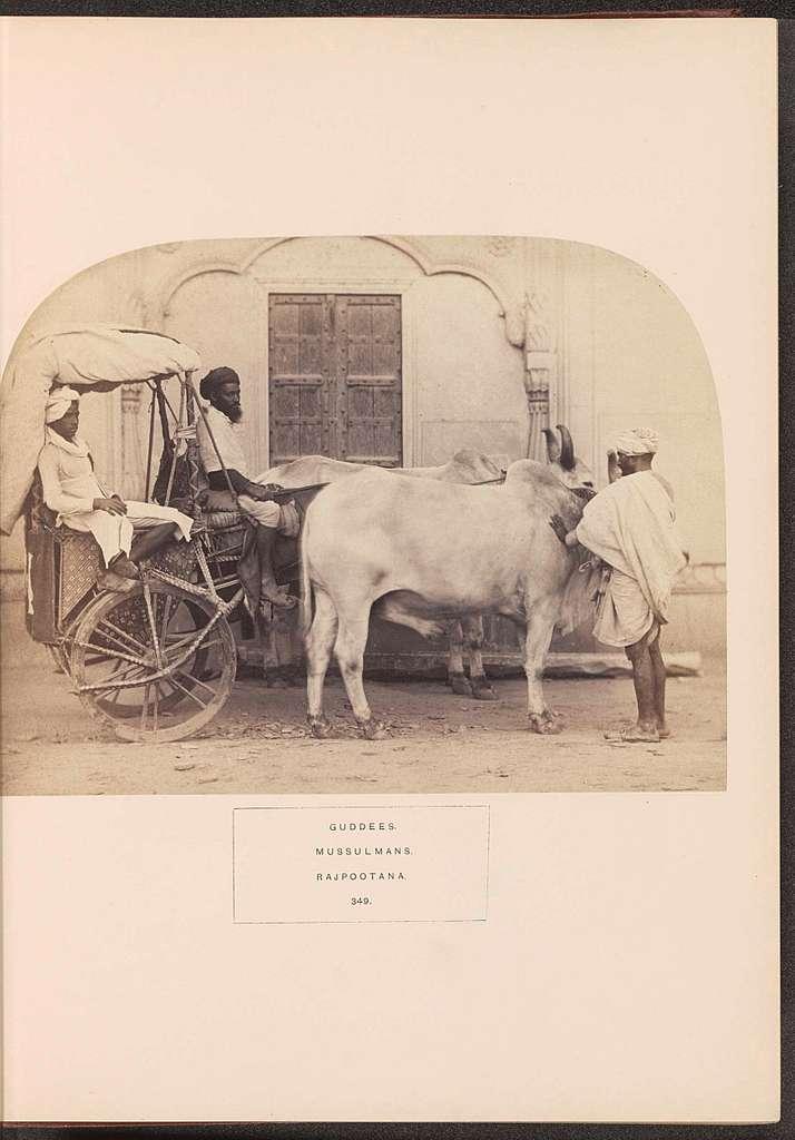 Gezicht op een koeienkar met een man erin, een bestuurder en een man die bij de koeien staat