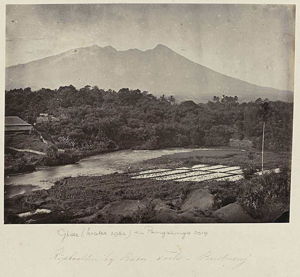 Rijstvelden bij Batoe Toelis - Buitenzorg