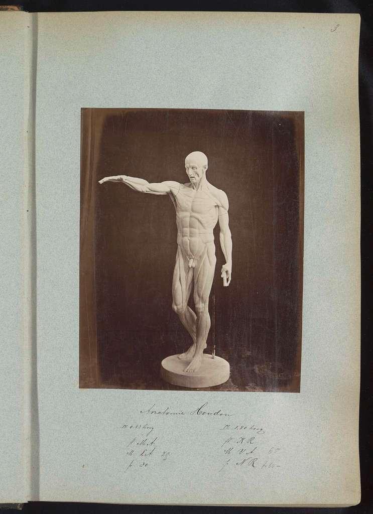 Gipsen afgietsel van een sculptuur naar studie van Houdon over de anatomie van het menselijk lichaam