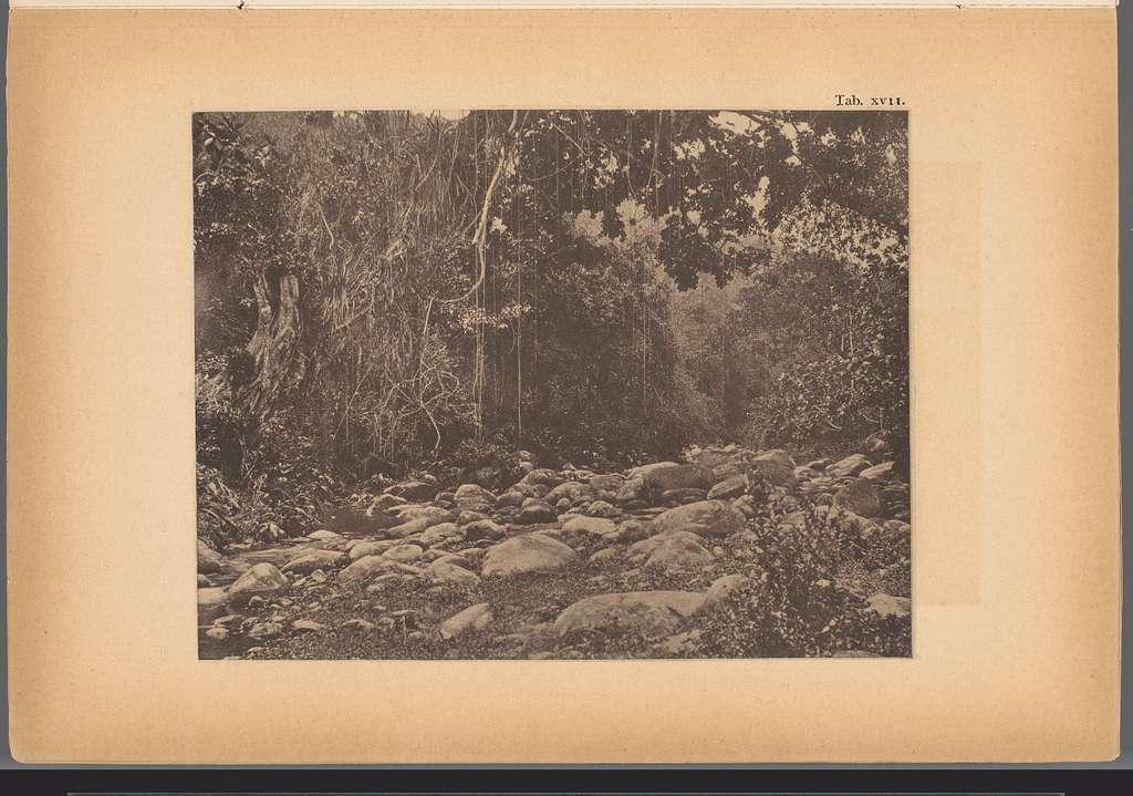 Gezicht op een bedding van de rivier San Esteban in Venezuela