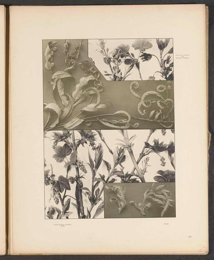 Vlakken met esdoornbladeren, aalbessen, pimpernoot en klaproosbladeren