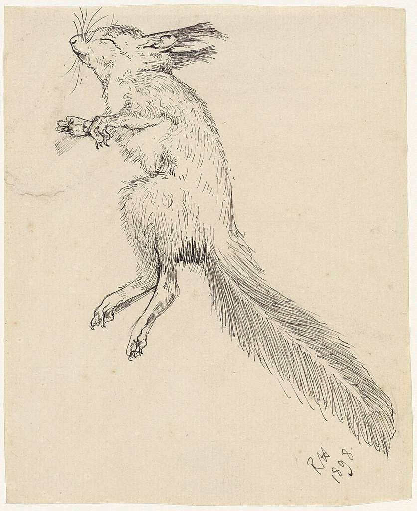 Dode eekhoorn