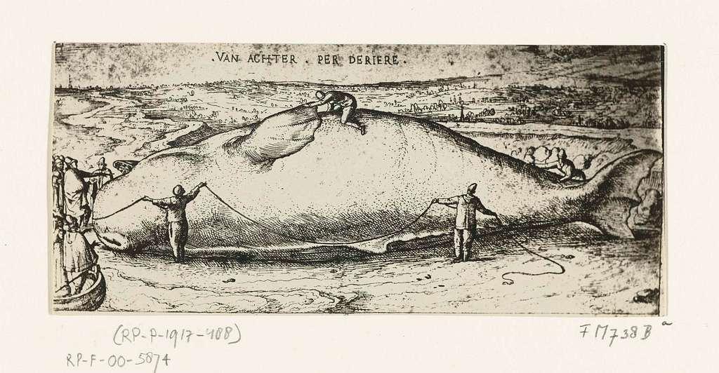 Prent van de aangespoelde walvis bij Antwerpen, 2 juli 1577